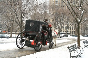 carrage in central park in the snow